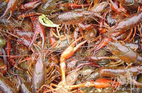 小龙虾养殖池怎么建