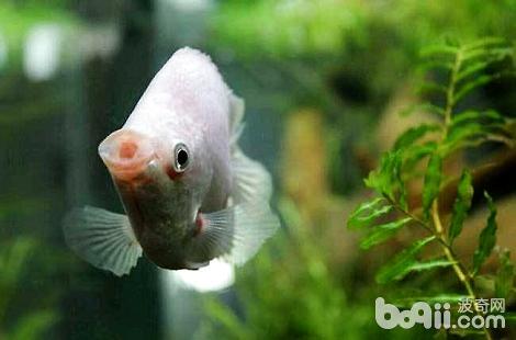 养的鱼为什么老是会死?