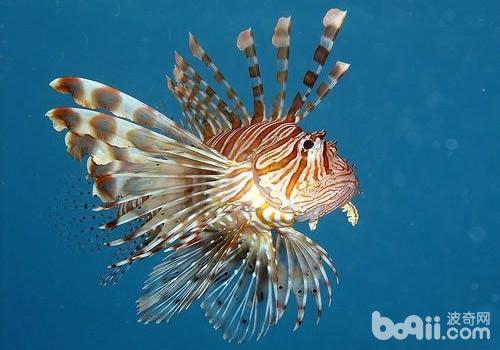 观赏鱼白点病的秋季预防要点