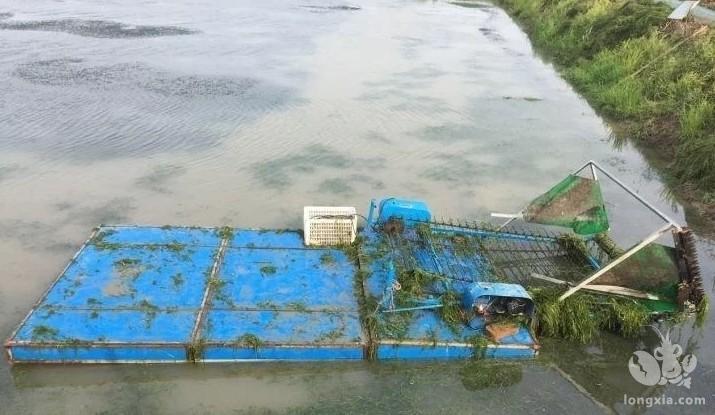 早春小龙虾养殖池塘应该注意些什么?
