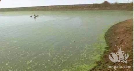 如何处理池塘前期的青苔问题?