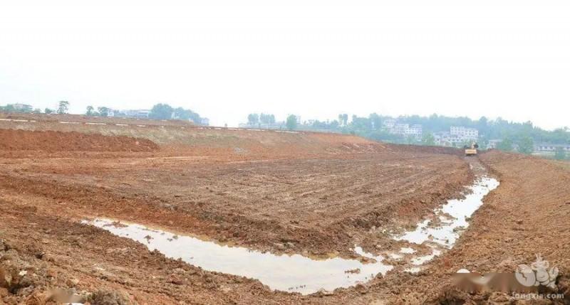 稻田冬季管理最大的两个问题是青苔和肥水。