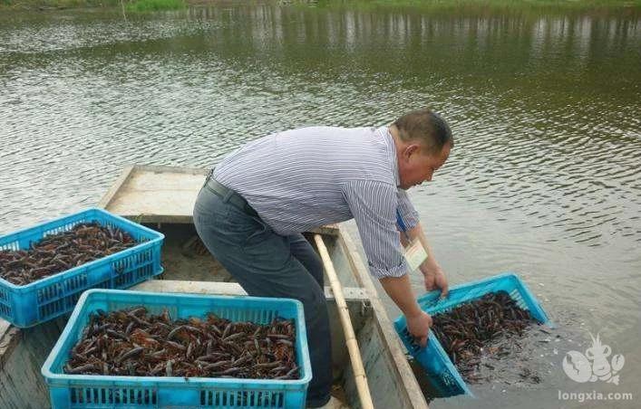 龙虾养殖怎么养?龙虾养殖能赚钱吗?龙虾养殖技术怎么提高?