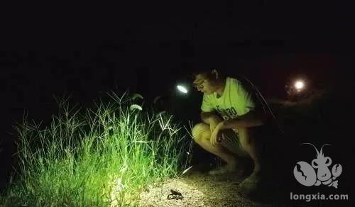 龙虾养殖户们别偷懒,夜间巡塘很重要