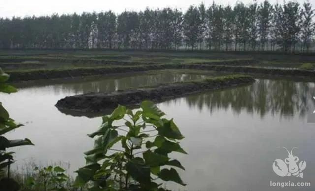 养殖小龙虾:做好准备是基础,控制水位是关键
