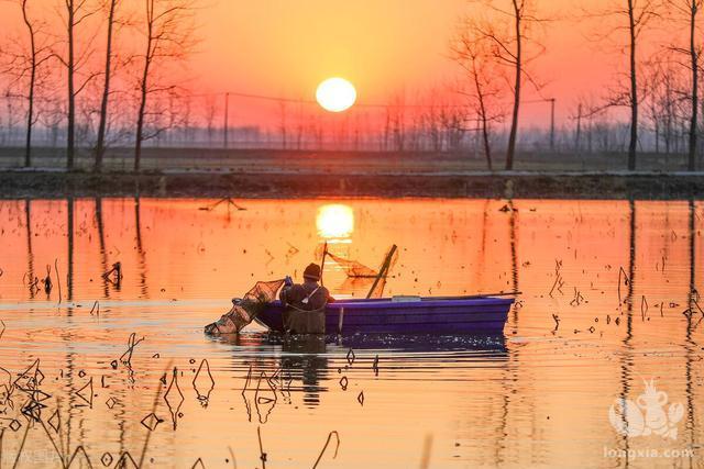 为什么建议农民还是在自己稻田养殖小龙虾赚钱?