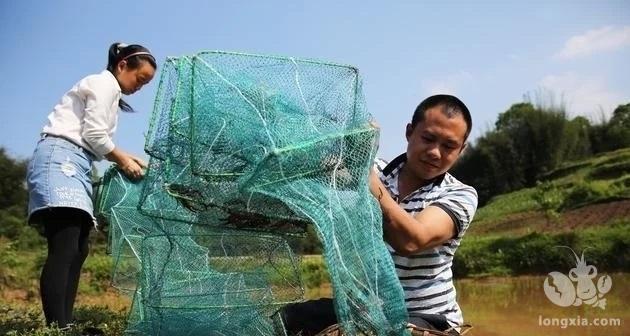 小龙虾池套养沙塘鳢效益高, 高产养殖管理技术介绍