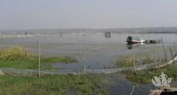 提高产量,小龙虾养殖池塘深好还是浅好?