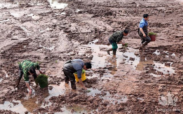 小龙虾养殖中如何养护水草