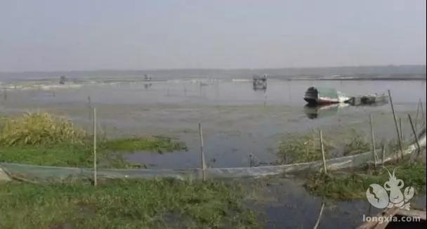 小龙虾养殖池塘深浅需注意!