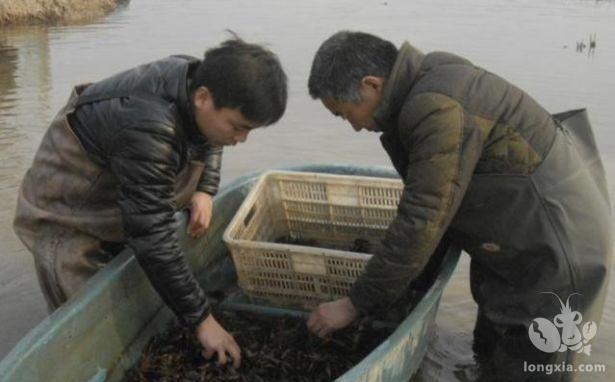 给小龙虾养殖池塘肥水,主要有以下几点好处