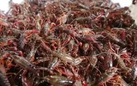 小龙虾价格烂市了吗从58一斤跌到18一斤?