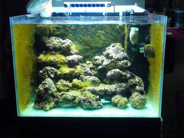 海水鱼的饲养器材准备