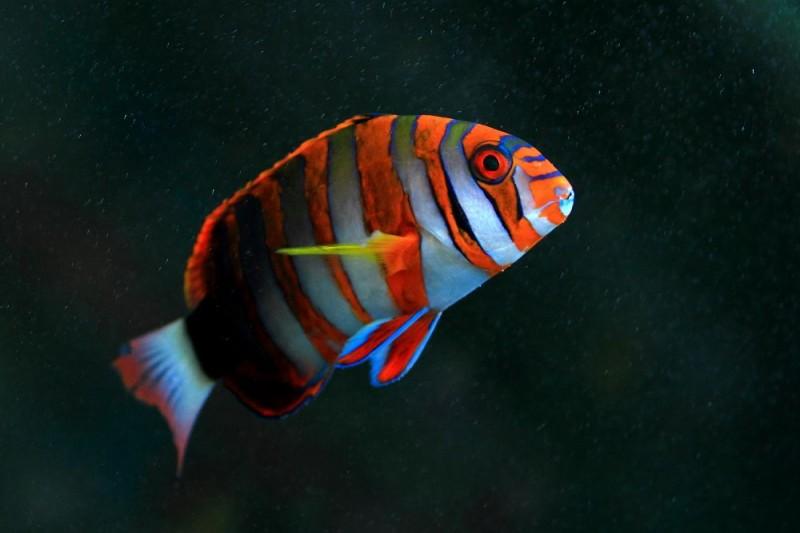 海水鱼与淡水鱼的差别分析