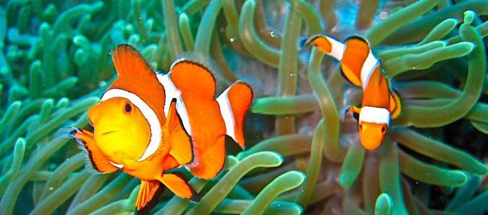 海水鱼养殖——新手上路