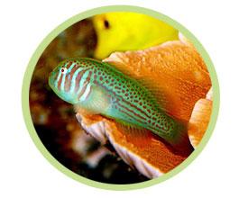 蟋蟀(绿色)