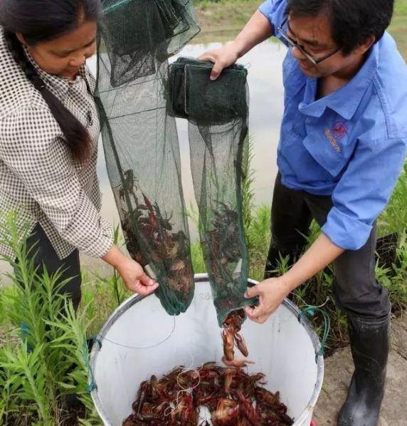 稻虾田水位降低的原因不止漏水一种原因,还有几点你不知道