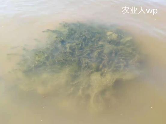 养小龙虾这一步要重视,很多人都因此损失惨重