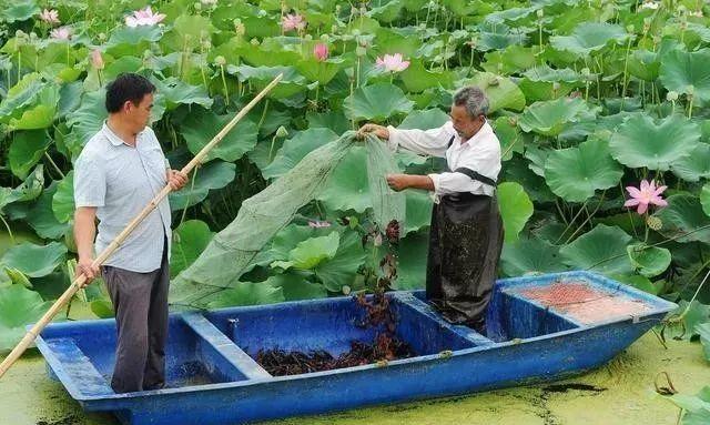 这些工作从四月就要做起来,才能防好龙虾养殖的黑色五月!