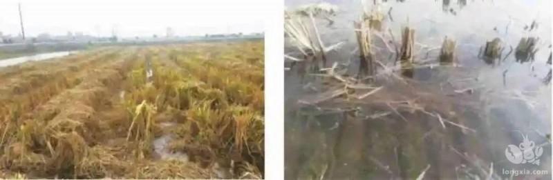 水稻秸秆的几项高效利用技术,以及秋冬施肥方式
