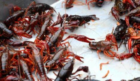 小龙虾的六大养殖模式,总有一款适合你