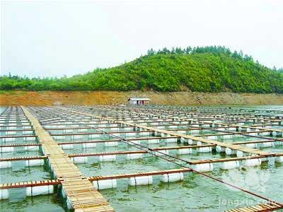 浅谈底质对水产小龙虾养殖的重要性