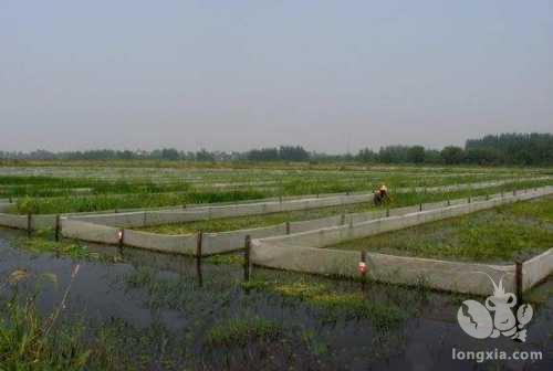 科学清塘改良土壤,是来年小龙虾养殖成功的关键一步!