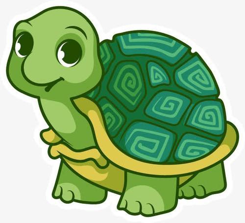 挺胸龟吃什么,挺胸龟形态特征