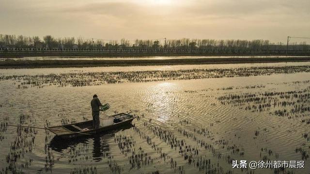 徐州这里养殖的龙虾,一列纵队能排到西安