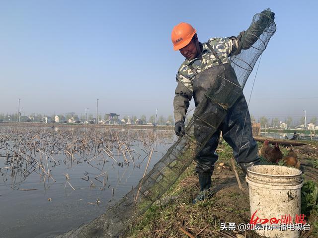 """江苏平园池村:""""虾藕共育""""生态养殖小龙虾"""