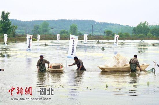 湖北小龙虾出鄂记:15小时从田间到上海门店