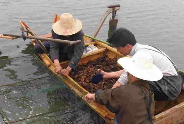 """中国""""小龙虾之乡"""":年产量超过15万吨,当地打破一项世界纪录"""