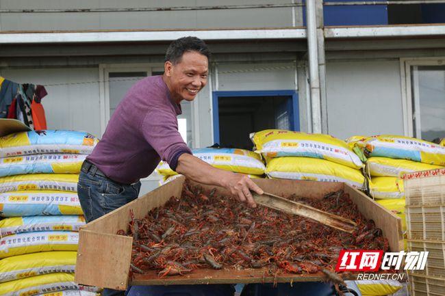 宁远:小龙虾拓宽农民致富路