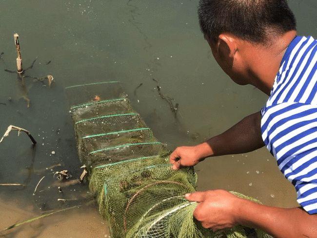 北方地区淡水小龙虾健康养殖技术探索