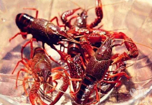 实战派:小龙虾成本多高,钱从何来?一笔一笔算给你听