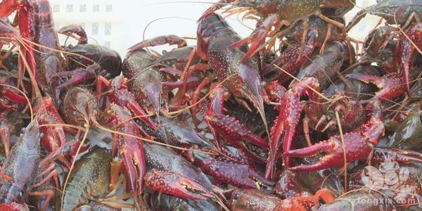 养一亩小龙虾得投资多少钱?小龙虾的养殖成本和利润分析