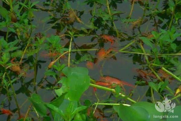小龙虾养殖场要多少成本