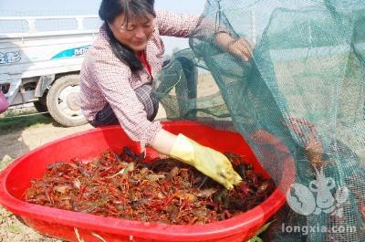 2020年的小龙虾能赚钱吗?还有新养殖户入坑?三大建议如下...