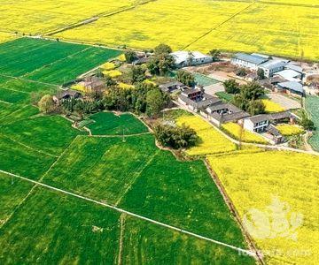 安徽省肥西县稻虾综合种养产业发展迅猛