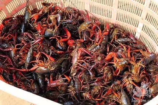 小龙虾市场饱和,养殖户被骂蠢?2021年的小龙虾养殖前景可观才对