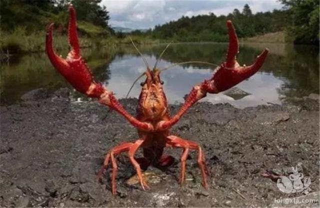 """小龙虾准备回归""""入侵物种""""?众多门店关闭,商家直言:卖不动了"""