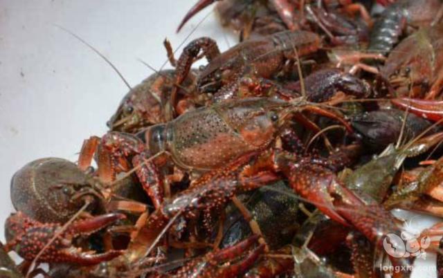 为什么现在小龙虾没有以前那么受欢迎?说了你们别不相信