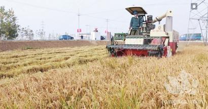 """880亩稻田迎来首个""""丰收季""""——钢铁产业链上""""长""""出现代生态农业"""