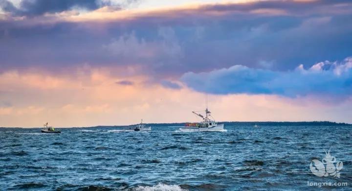 加拿大最大龙虾产区将启动捕捞季,船头收购价较去年有所上涨