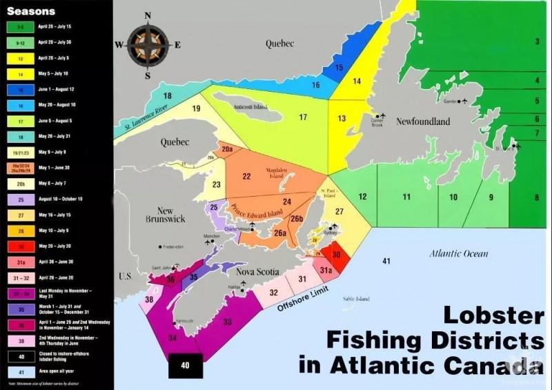 加拿大龙虾新产季首战告捷,产量质量提升,价格上涨