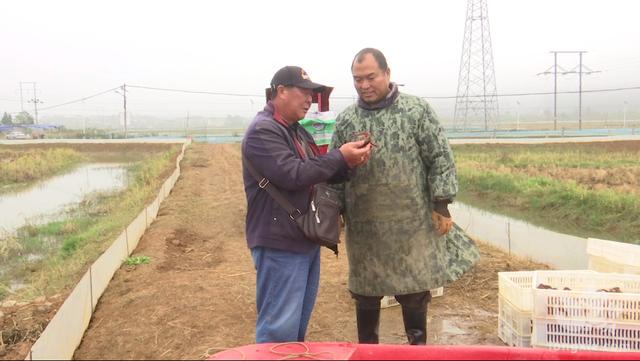 """只为土地增效 农民增收——吴奎元到义龙坝区指导""""稻虾共养""""小记"""