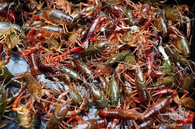 前几年火爆的小龙虾,今年低价之后,还能继续养吗?