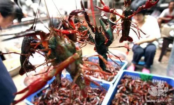 小龙虾价格仍然暴跌,成本价还滞销!明年的小龙虾还能规模养殖吗?