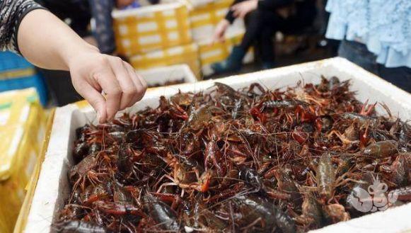市场持续遇冷,水产行业大崩盘!2020年的小龙虾行情却更加乐观……