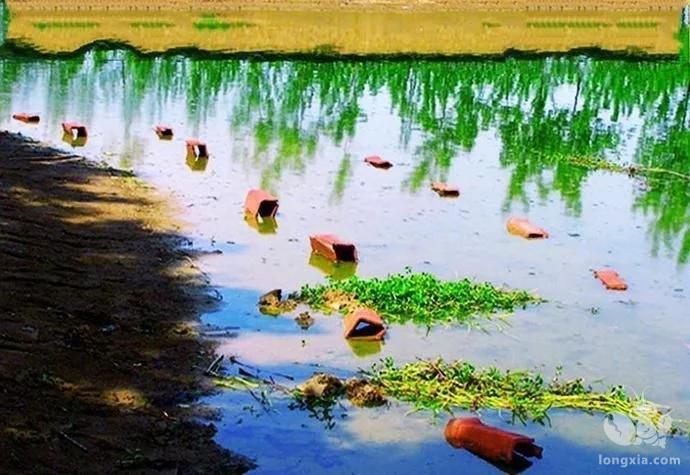 小龙虾养殖正常一亩能出多少斤龙虾?
